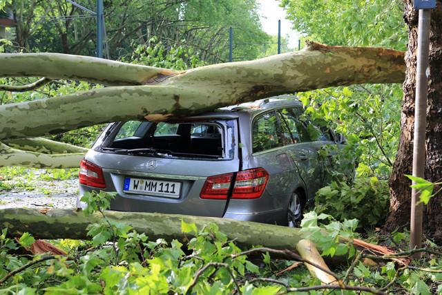 Auto unter Baum