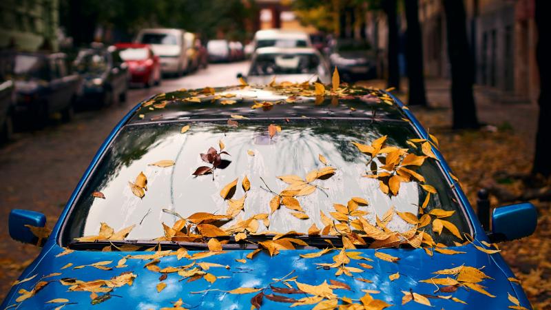 Blaues Auto mit Blättern
