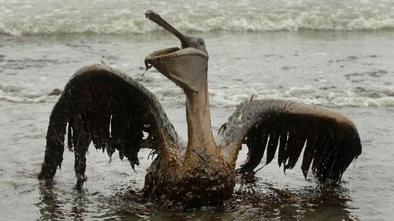 Deepwater Horizon - Jahrestag der schwersten Ölpest