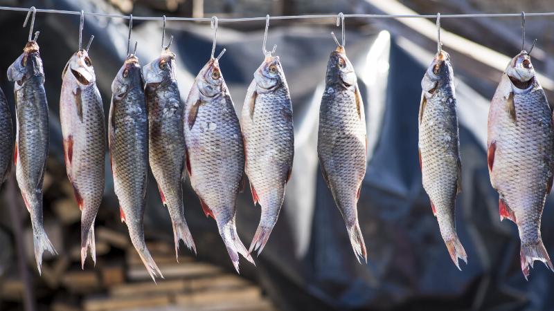 Fische an Leine