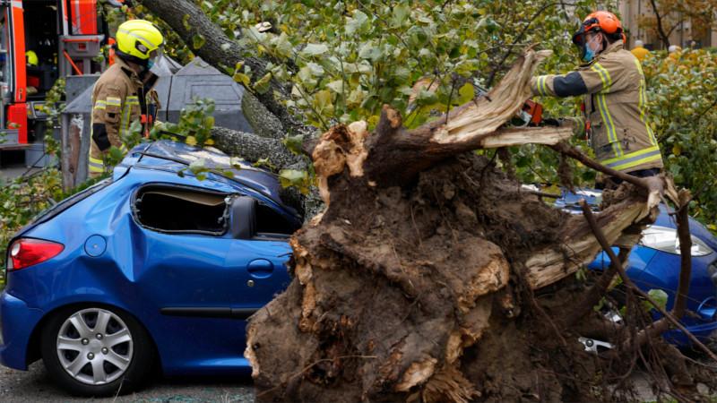 Feuerwehrleute zersägen in Berlin einen umgestürzten Baum – Sturm Hendrik