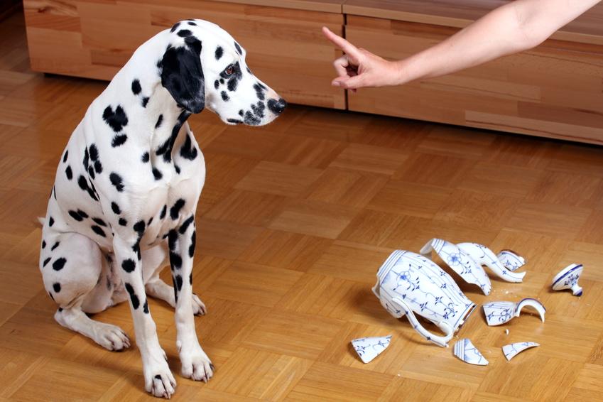 Hundehaftpflicht huk